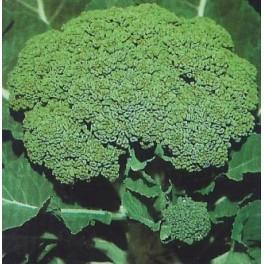 """Semi di Cavolo Broccolo """"Ramoso Calabrese"""""""