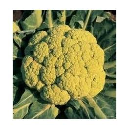 """Semi di Cavolo Broccolo """"Di Albenga Precoce"""""""