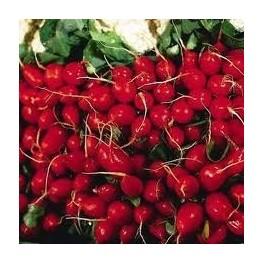 """Semi di Ravanello """"Cherry Belle"""""""